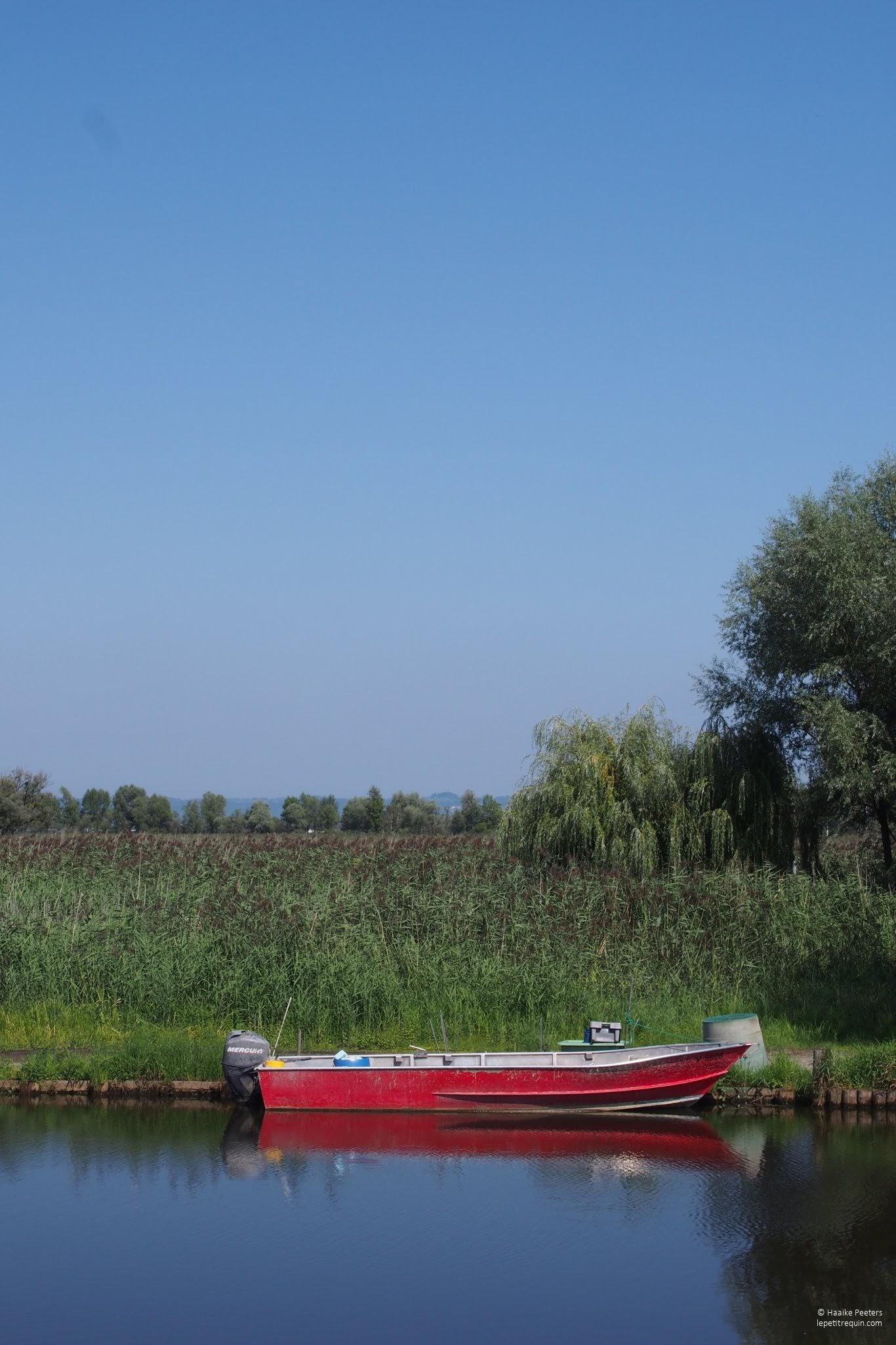 Rheindelta (Le petit requin)