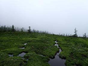 湿地帯が続く