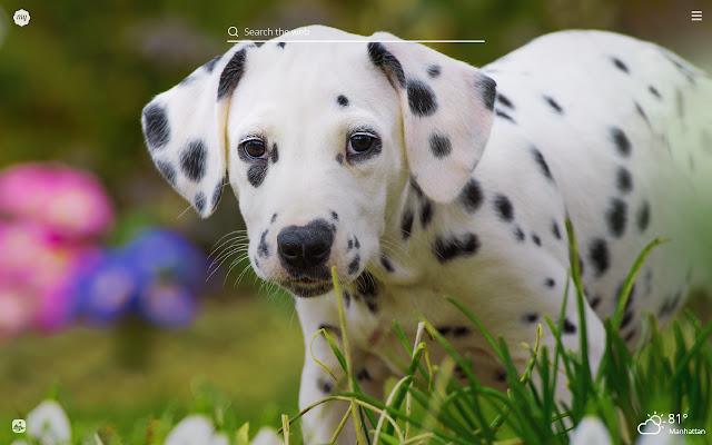 My Dalmatian Cute Dog & Puppy HD Wallpapers