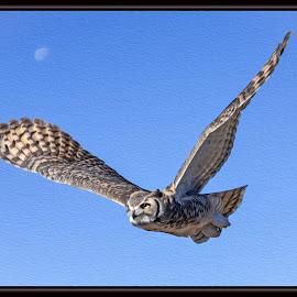 Great Horned Owl by Dawn Hoehn Hagler - Digital Art Animals ( arizona-sonora desert museum, tucson, owl, arizona, bird, desert museum, great horned owl, photoshop, oil paint, digital art )
