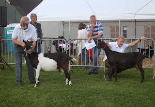 Photo: Klasse 2: 1 jarige bonte geiten.  1a. Zwaanheuvel Marielle 8; 1b. Kolly v/d Oude Schuur.