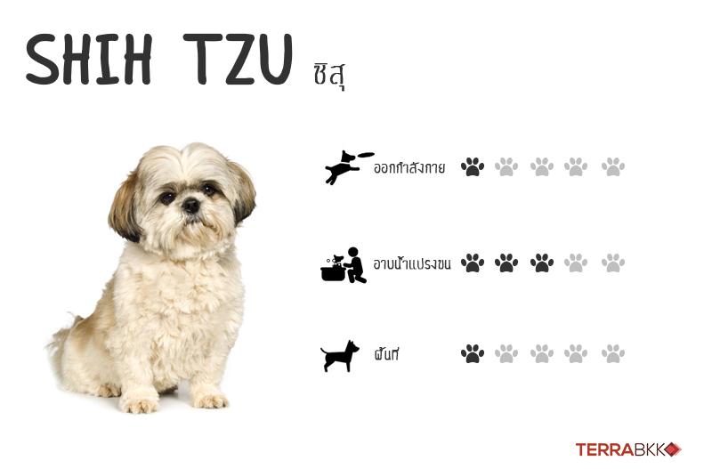 7. ชิสุ (Shih Tzu)