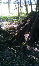 Photo: The root-beings were very powerful as we made our way through the Faery Grove....