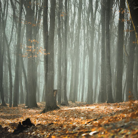 by Alex Jitaru - Landscapes Forests