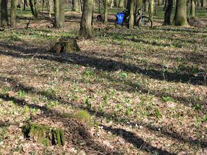 """Photo: Obszar Chronionego Krajobrazu """"Łęg Zdzieszowicki"""". Rower pozostawiam oparty o drzewo i spokojnie spaceruję po lesie."""