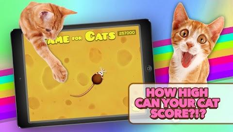 Game for Catsのおすすめ画像4