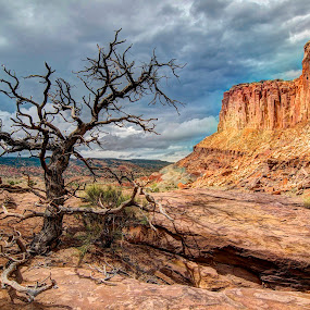 Capital Reef by Kent Moody - Landscapes Deserts ( tree, utah, capital reef, sandstone, canyon, relax, tranquil, relaxing, tranquility,  )