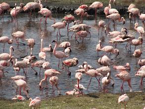 Photo: Flamingoes