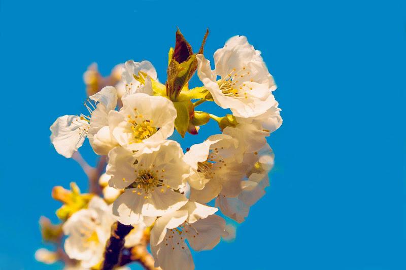 L'arrivo della primavera di gocciazzurra