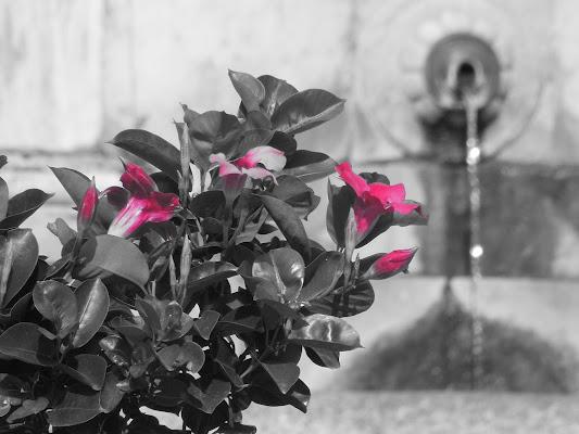 Fiori in piazza di Agocentrico