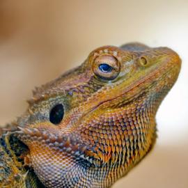by Ad Spruijt - Animals Reptiles