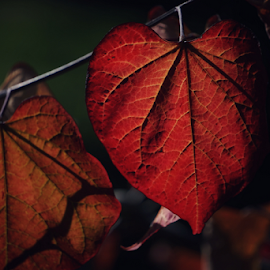 Fall  by Todd Reynolds - Nature Up Close Leaves & Grasses (  )