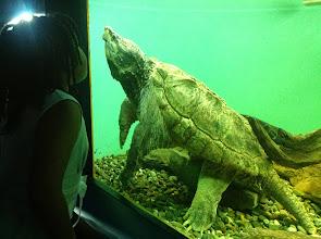 Photo: a tortoise