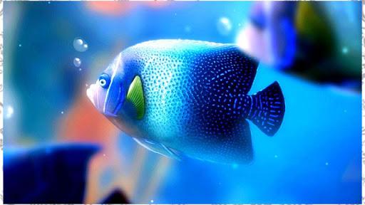玩免費娛樂APP|下載魚背景 app不用錢|硬是要APP