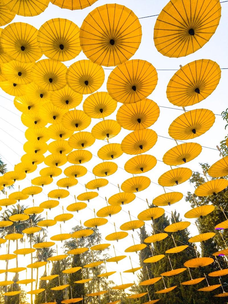Pioggia di gialli di Kamone
