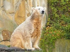 Photo: Knut auf Beobachtungsposten ;-)