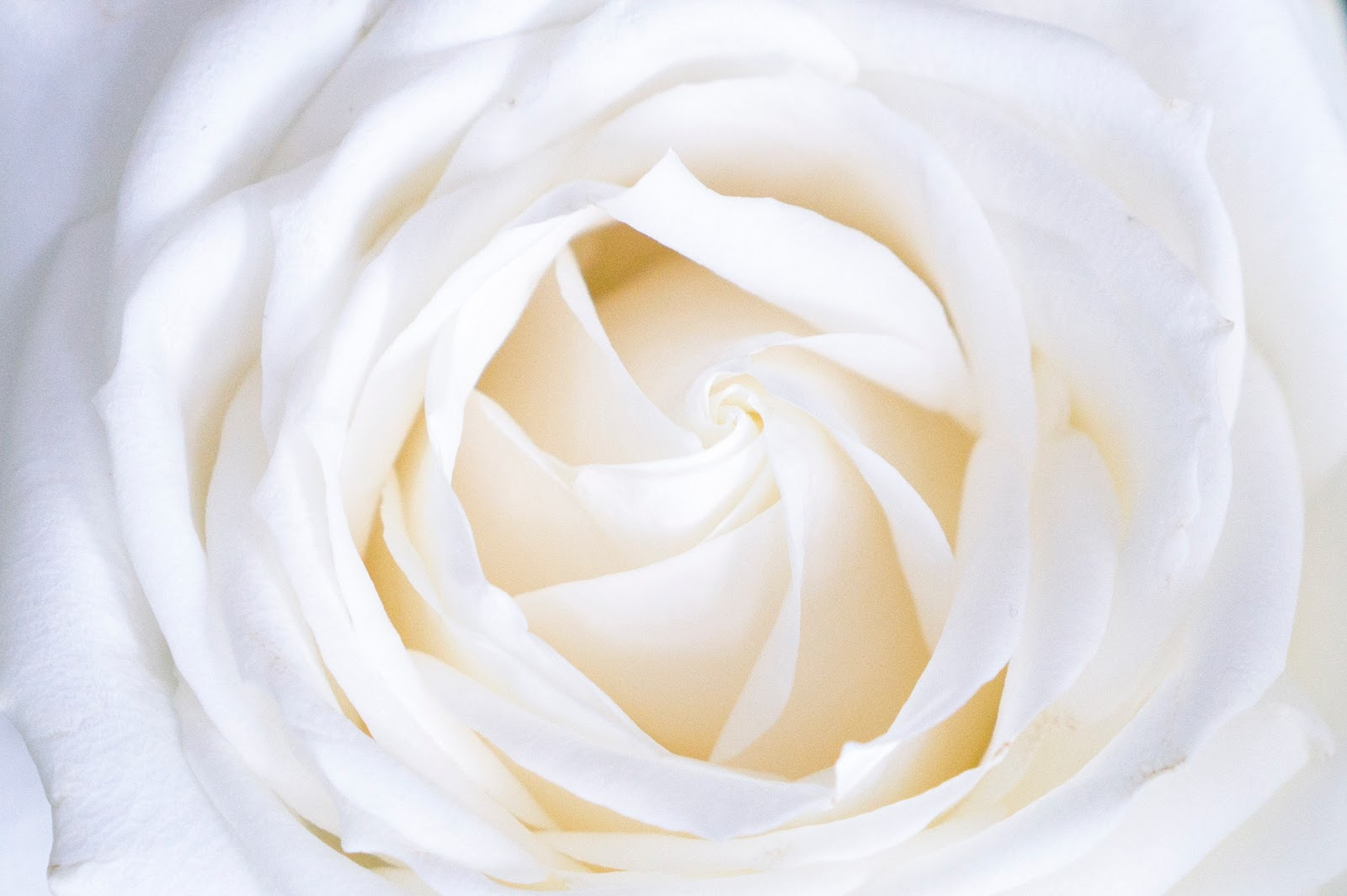 A Guide To Choosing Funeral Flowers Fresh Flowers