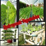 Hydroponic Vegetables 1.0
