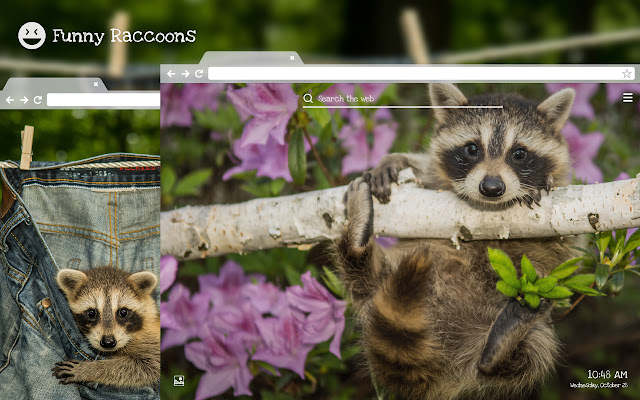 Funny Raccoons HD Wallpapers New Tab Theme