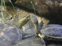 趁遊客不注意偷偷親的烏龜