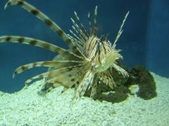 搔首弄姿的蝴蝶魚