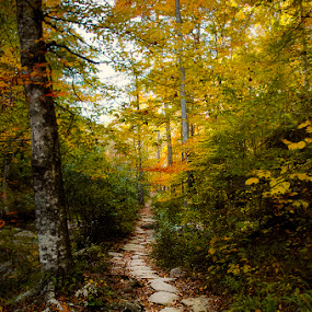 Elven Trail by Alabama Photos - Landscapes Forests ( trail, fall, trees, forest, woods )