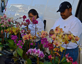 Photo: 21. They had plenty of food stands, as well as some stands offering hot meals. They also had many crafts to offer, as well as some colorful hand-made clothes. I was intrigued to find these orchids displayed for sale. I am a pretty serious gardener and love plants of all kinds. I have never ventured into keeping orchids as a hobby, but I can sure see why some people are crazed about them.
