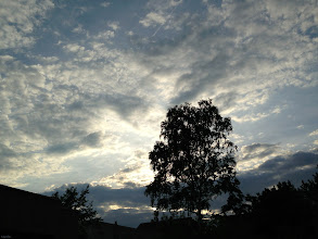 Photo: evening sky  #TreeTuesday ( +Tree Tuesday ) Curated by +Christina Lawrie , +Shannon S. Myers , +Allan Cabrera , +Ralph Mendoza and +Kim Troutman #fotoamateur // +Fotoamateurby +Britta Rogge+Karsten Meyer+Scotti van Palm+Markus Landsmann+Remo Primatesta #silhouette