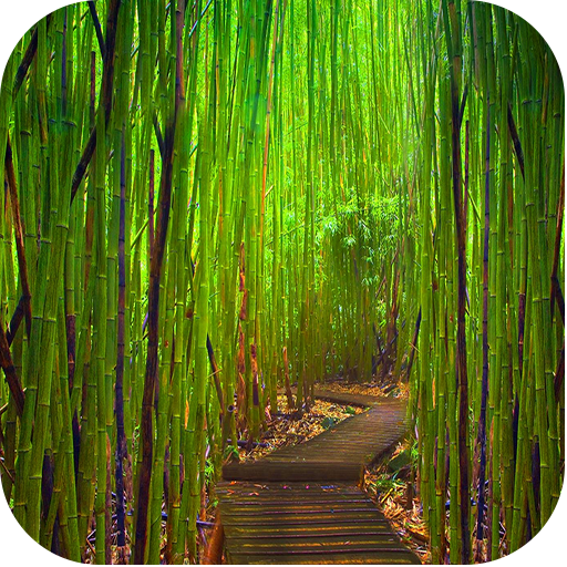 竹壁纸。 娛樂 App LOGO-APP開箱王