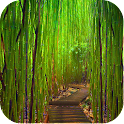 Bamboo Wallpapers icon