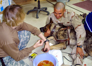 Photo: KIRKUK, Iraq (May 31, 2006) -- Captain Kristie Souders, officer in charge, 3rd Squad,  72nd Medical Detachment, Rose Barracks, Vilseck Germany, cleans a wound on one of the Military Working Dogs. The staff at Forward Operating Base Warrior's Veterinary Clinic treats MWDs, as well as handling food inspection and stray animal control. (U.S. Army photo courtesy 3/72nd Med. Det.)