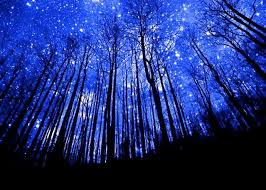 Image result for woods at night with stars