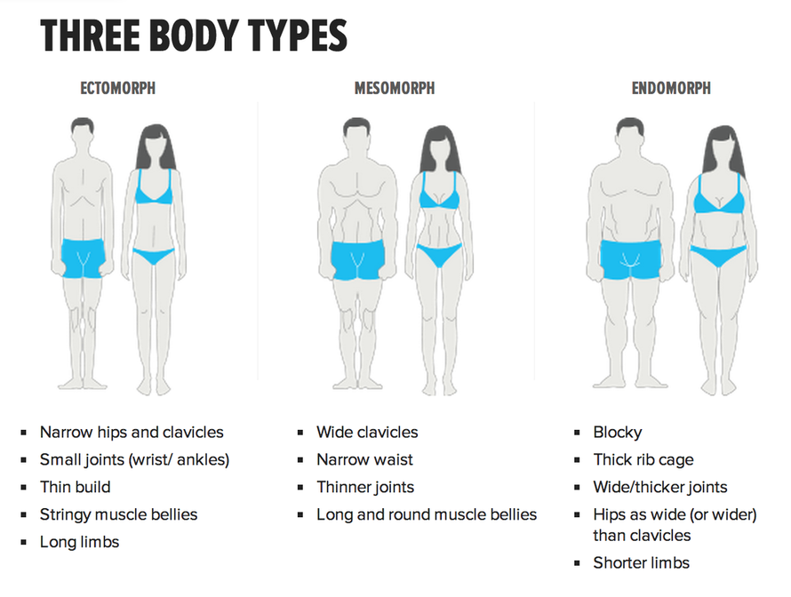 three different body types: ectomorph, mesomorph, and endomorph to show that body sizes are diverse but only thin body sizes are represented