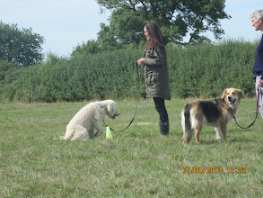 Photo: Add a Cue game, Kerry with Alan Labradoodle, Gretl Golden X with Anne