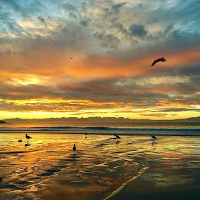 Golden Sunrise by Francisco Little - Landscapes Beaches ( capetown, gold, sunrise, beach, dawn,  )