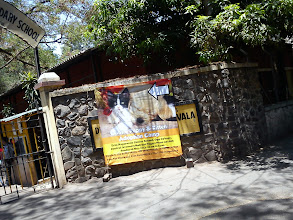Photo: Dog and cat adoption camp I found in May.Many stray animals are living together with humans in India. One interesting story I heard yesterday was monkeys appeared in Kothrud, one of residential areas in Pune, robbed mobile phones from people, not interested in food, which means tech savvy trend is not only among us :) However in the modern city landscape, those animals face a lot of difficulties such as abusing & killing, traffic accidents, consumption of dangerous materials from garbage like plastic bags. In Pune, the government periodically spay female stray dogs for birth control. Reference: PETA India (http://action.petaindia.com/) 7th August updated -http://jp.asksiddhi.in/daily_detail.php?id=263