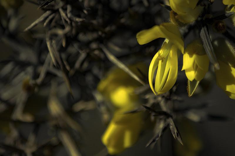 yellow in the winter di elyan
