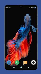 Betta Fish Wallpaper HD 4