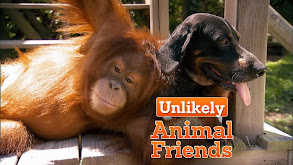 Unlikely Animal Friends thumbnail
