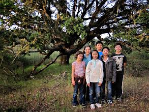 Photo: kids and beautiful oak tree
