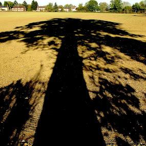 Great Oak Shadow...St.Albans  by Ian Cormack - Nature Up Close Trees & Bushes ( shadow, oak tree )