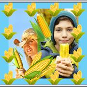Corn Photo Collage Maker