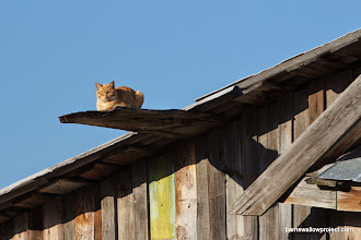 Photo: Cat on a hot tin roof