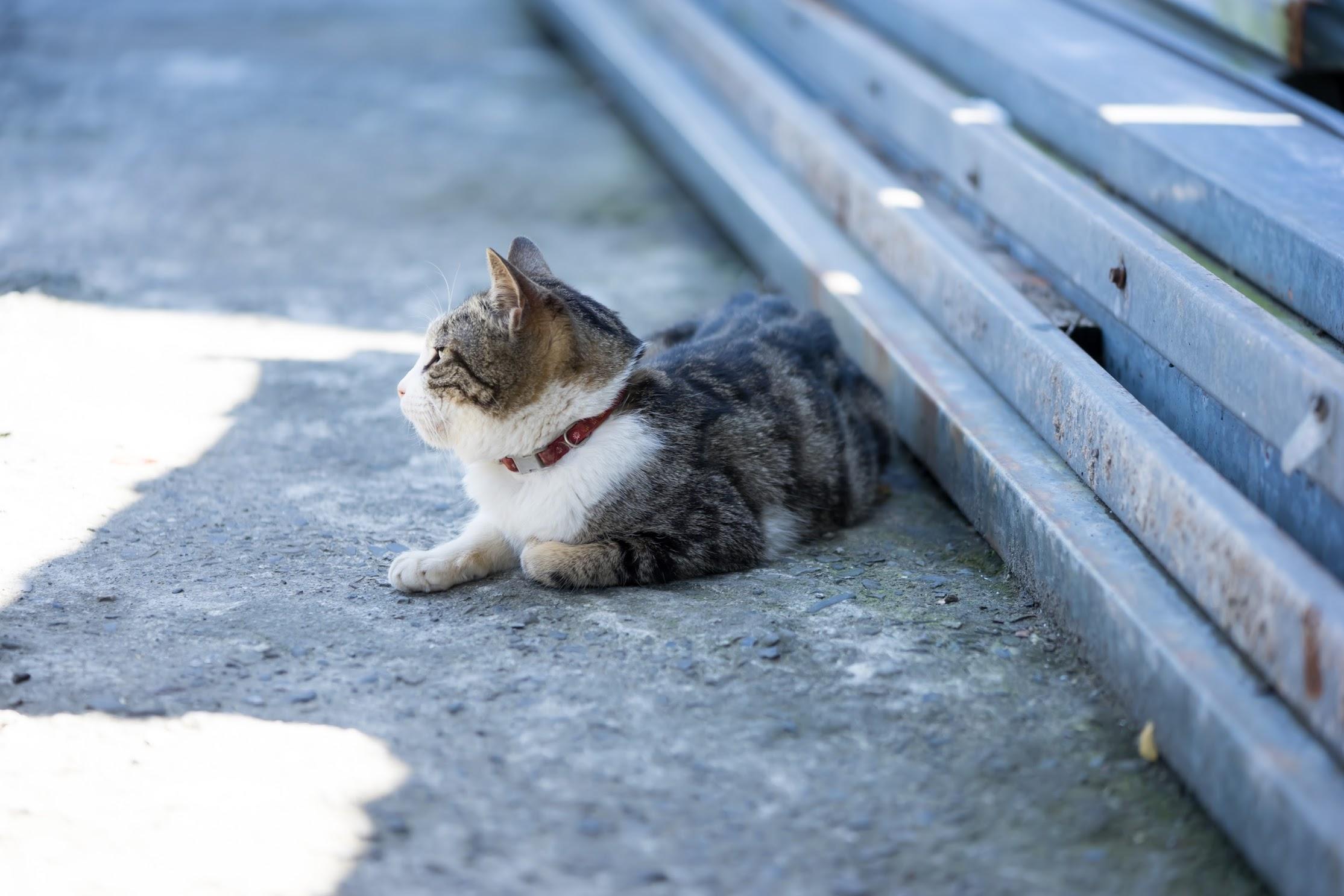 平渓線 猴硐 猫1