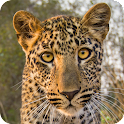 Did you know… African Wildlife icon