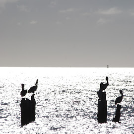 by Wendy Takahashi - Black & White Landscapes