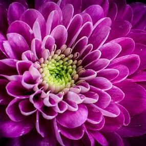 Open heart by Ron n'Roll - Flowers Single Flower ( beautiful, fresh, flower,  )