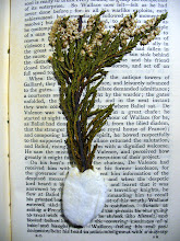 """Photo: A cutting of white heather found in a Victorian print of Porter's """"The Scottish Chiefs""""."""