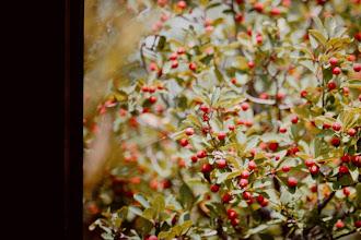 Photo: Red berries?