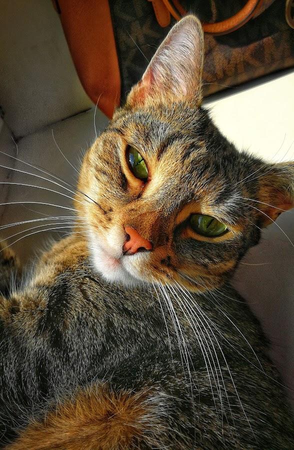 😍 by Baks Berbl - Animals - Cats Portraits